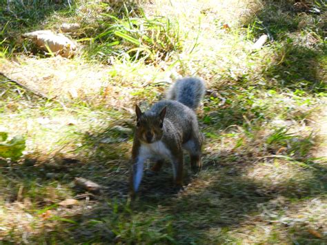 Great Yarmouth – Squirrel in Cemetery – Walking